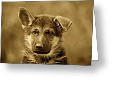 German Shepherd Puppy In Sepia Greeting Card
