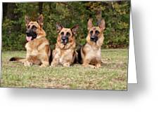 German Shepherds - Family Portrait Greeting Card