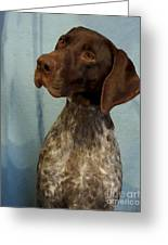 German Shorthaired Pointer 129 Greeting Card