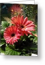 Gerberas In Coral Pink 2 Greeting Card
