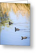Getting My Ducks In A Row Greeting Card