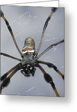 Getting To Know A Golden Orb Weaver Greeting Card