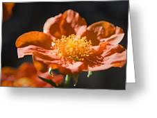 Geum Scarlet Avens Greeting Card