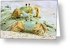 Ghost Crabs Greeting Card