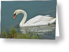 Ghost In The Lagoon Greeting Card