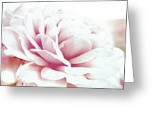 Ghost Of Roses Past Greeting Card