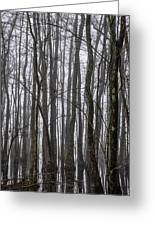 Ghost Swamp Greeting Card