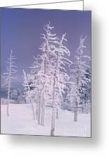 Ghost Trees Yellowstone National Park Greeting Card