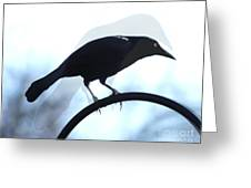 Ghosted Grackle Greeting Card
