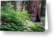 Giant Among The Forest Greeting Card