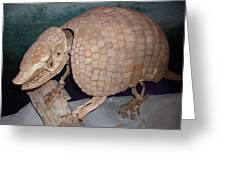 Giant Armadillo 2 Greeting Card
