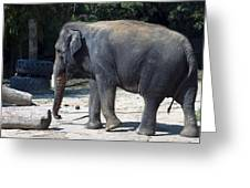 Giant Asian Elephant Greeting Card by Brendan Reals