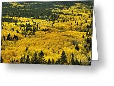 Giant Aspen Glen 2 Greeting Card