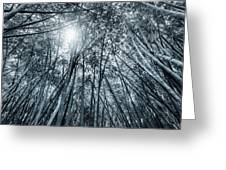 Giant Bamboo In Forest With Sunflare, Black And White Greeting Card