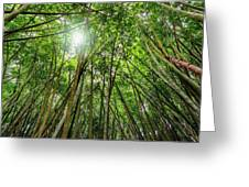 Giant Bamboo In Forest With Sunflare Greeting Card