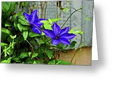 Giant Blue Clematis Greeting Card
