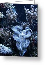 Giant Clam Greeting Card by Karl Reid