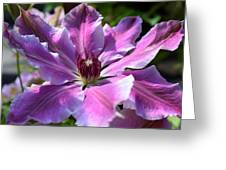 Giant Clematis Greeting Card