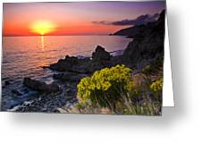 Giant Coreopsis Sunset 2 Greeting Card