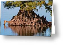 Giant Cypress Tree In Reelfoot Lake Greeting Card