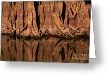 Giant Cypress Tree Trunk And Reflection Greeting Card