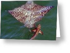 Giant Eagle Ray Greeting Card