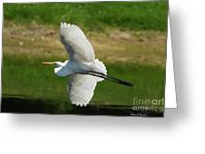 Giant Egret Grace Greeting Card