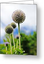 Giant Globe Thistle Greeting Card