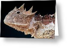 Giant Horned Lizard Greeting Card