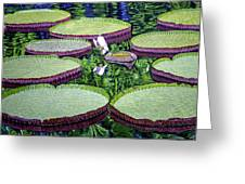 Giant Lily Greeting Card