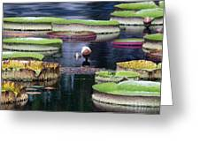 Giant Lily Pads Greeting Card