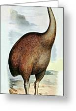 Giant Moa Dinornis Ingens, Cenozoic Bird Greeting Card