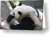 Giant Panda Bear Resting On A Fallen Tree Greeting Card