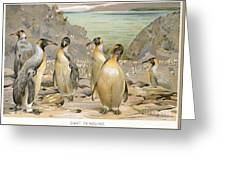 Giant Penguins, C1900 Greeting Card
