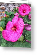 Giant Pink Hibiscus Greeting Card