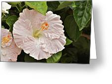 Giant Pink Hibiscus I Greeting Card