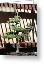 Giant Redwood Bonsai  Greeting Card