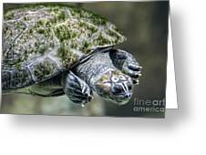 Giant River Turtle Greeting Card