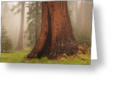 Giant Sequoia Tree Greeting Card