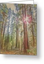 Giant Sequoias Greeting Card