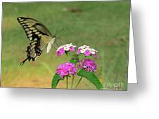 Giant Swallowtail Butterfly II Greeting Card