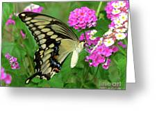 Giant Swallowtail Butterfly  IIi Greeting Card