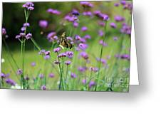 Giant Swallowtail Butterfly In Purple Field Greeting Card