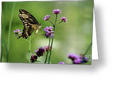 Giant Swallowtail Butterfly On Verbena Greeting Card