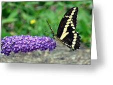 Giant Swallowtail Three Greeting Card