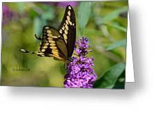 Giant Swallowtail Two Greeting Card