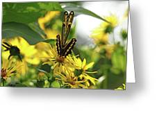 Giant Swallowtail Wings Folded Greeting Card