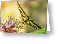 Giant Swallowtail With Yosemite Showy Milkweed Greeting Card