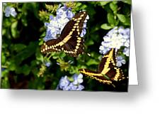 Giant Swallowtails Greeting Card by Steven Scott