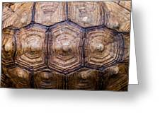 Giant Tortoise Carapace Greeting Card